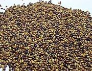 Жоңышқа ұрығы (семена Клевера)